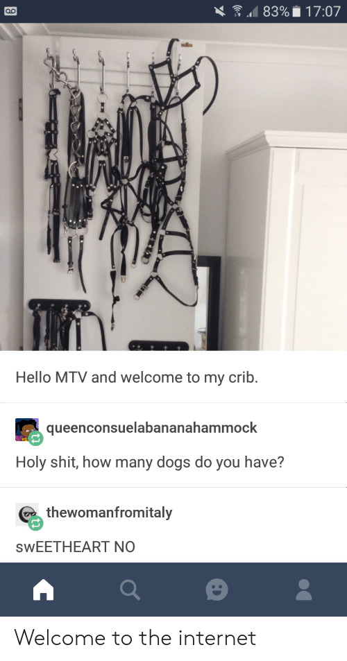Dogs, Hello, and Internet: Hello MTV and welcome to my crib.  queenconsuelabananahammock  Holy shit, how many dogs do you have?  thewomanfromitaly  SwEETHEART NO Welcome to the internet
