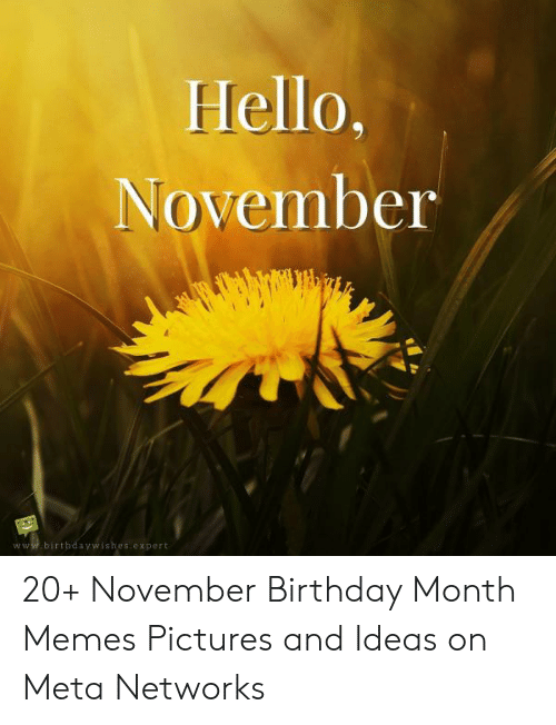 Birthday, Hello, and Memes: Hello,  November  www.birthdaywishes.expert 20+ November Birthday Month Memes Pictures and Ideas on Meta Networks