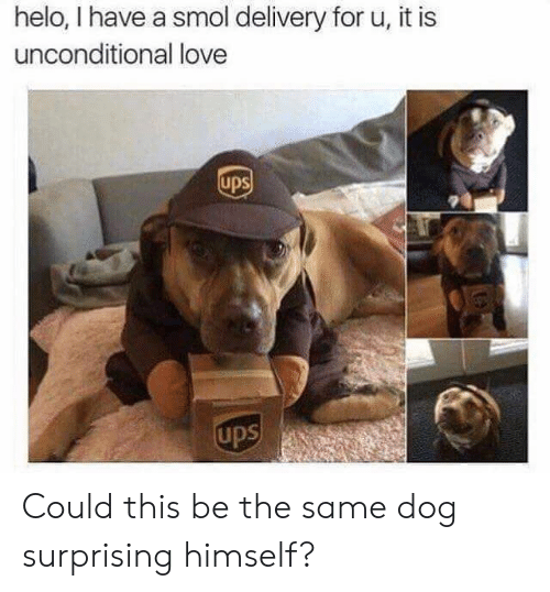 delivery: helo, I have a smol delivery for u, it is  unconditional love  ups  ups Could this be the same dog surprising himself?