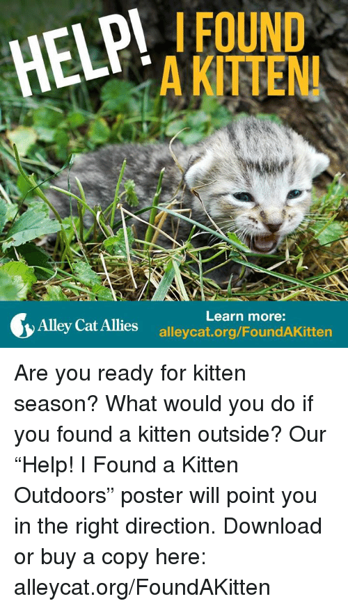 "alley cats: HEMPI  FOUND  AKITENI  Learn more:  Alley Cat Allies Are you ready for kitten season? What would you do if you found a kitten outside? Our ""Help! I Found a Kitten Outdoors"" poster will point you in the right direction. Download or buy a copy here: alleycat.org/FoundAKitten"