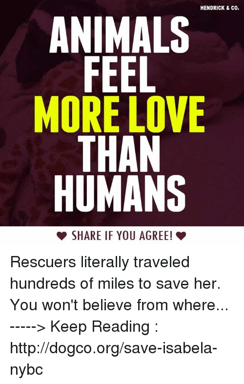 Memes, Travel, and 🤖: HENDRICK & co.  ANIMALS  FEEL  MORE LOVE  THAN  HUMANS  SHARE IF YOU AGREE! Rescuers literally traveled hundreds of miles to save her. You won't believe from where...  -----> Keep Reading : http://dogco.org/save-isabela-nybc