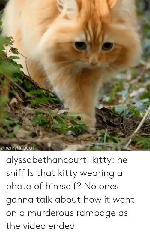 Tumblr, Blog, and Http: @henrykingcat alyssabethancourt: kitty: he sniff  Is that kitty wearing a photo of himself?   No ones gonna talk about how it went on a murderous rampage as the video ended