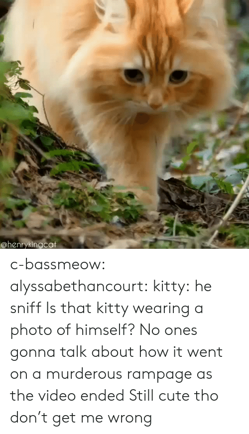 murderous: @henrykingcat c-bassmeow:  alyssabethancourt: kitty: he sniff  Is that kitty wearing a photo of himself?   No ones gonna talk about how it went on a murderous rampage as the video ended   Still cute tho don't get me wrong