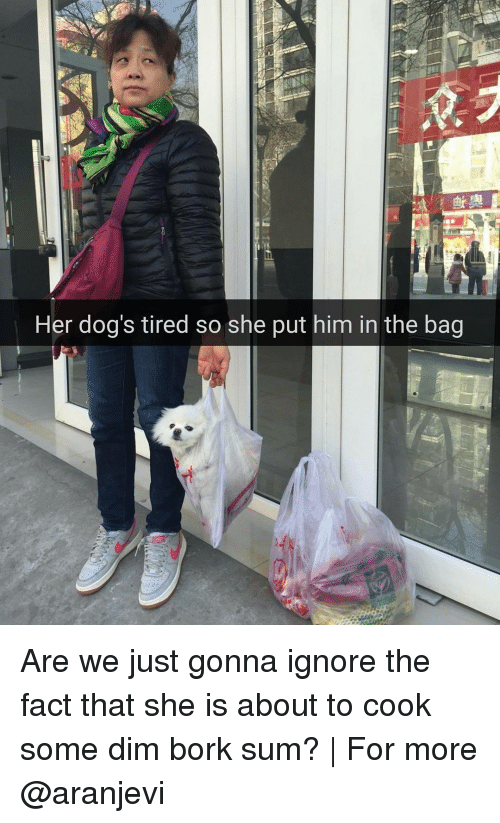 Børk: Her dog's tired so she put him in the bag  由 Are we just gonna ignore the fact that she is about to cook some dim bork sum? | For more @aranjevi