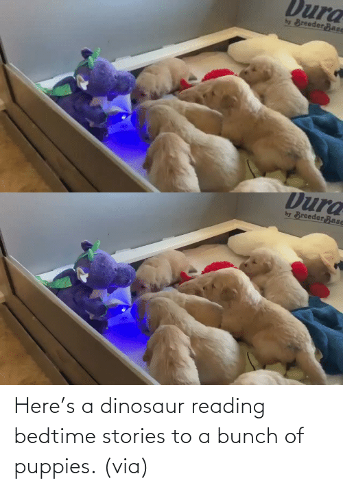 Puppies: Here's a dinosaur reading bedtime stories to a bunch of puppies. (via)