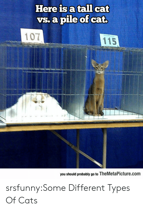 Different Types: Here is a tall cat  vs. a pile of cat.  107  115  you should probably go to TheMetaPicture.com srsfunny:Some Different Types Of Cats