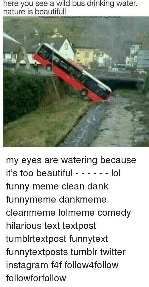 Memes Cleans: here  you see a bus water.  wild  drinking  nature is beautifull my eyes are watering because it's too beautiful - - - - - - lol funny meme clean dank funnymeme dankmeme cleanmeme lolmeme comedy hilarious text textpost tumblrtextpost funnytext funnytextposts tumblr twitter instagram f4f follow4follow followforfollow