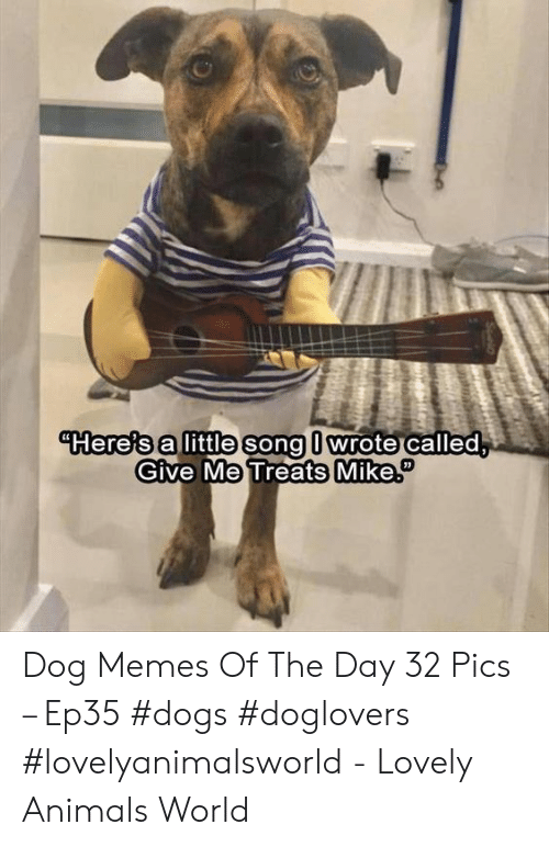 Animals, Dogs, and Memes: Hereis alittle song l wrote called  Give Me Treats Mik Dog Memes Of The Day 32 Pics – Ep35 #dogs #doglovers #lovelyanimalsworld - Lovely Animals World