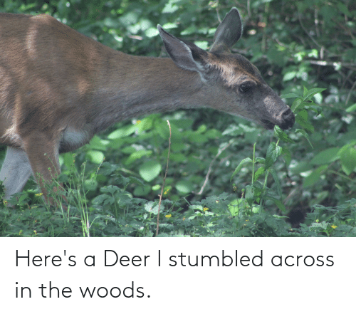 Deer: Here's a Deer I stumbled across in the woods.