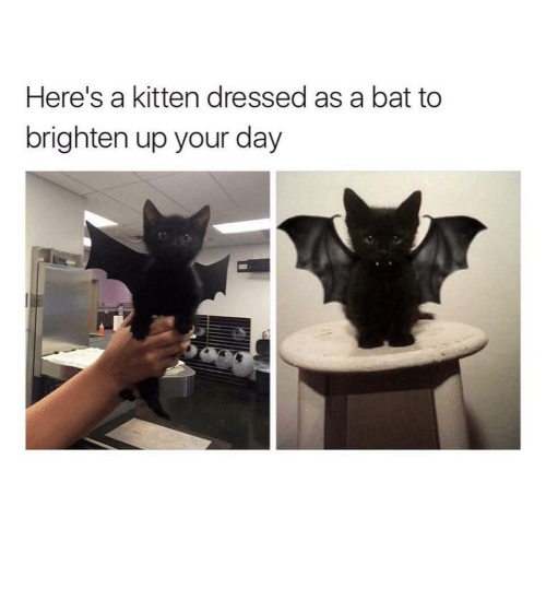 Heres A: Here's a kitten dressed as a bat to  brighten up your day Adorable kitten now