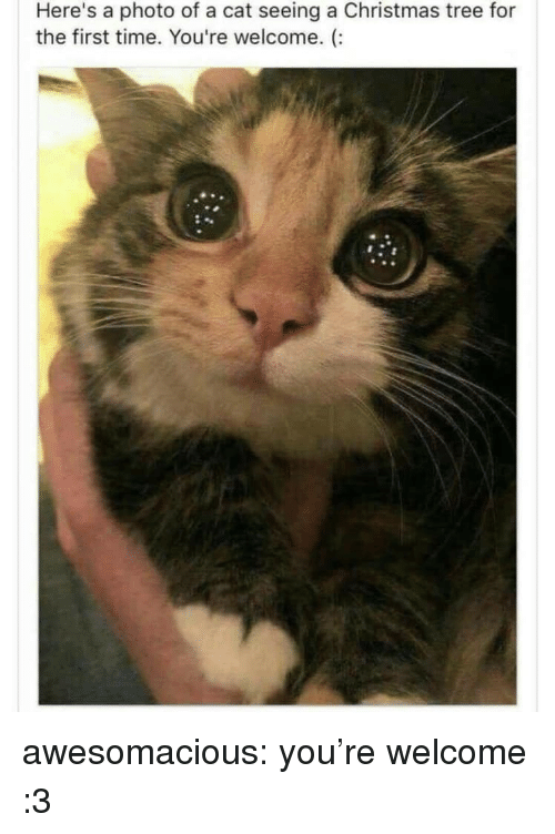 Christmas, Tumblr, and Blog: Here's a photo of a cat seeing a Christmas tree for  the first time. You're welcome. (: awesomacious:  you're welcome :3