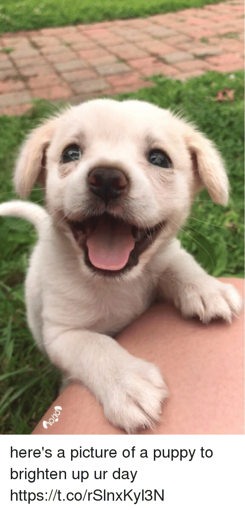 Brightened: here's a picture of a puppy to brighten up ur day https://t.co/rSlnxKyl3N