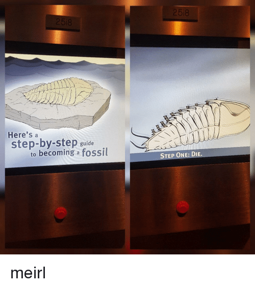 step by step: Here's a  step-by-step guide  to becoming a fossil  STEP ONE: DIE. meirl