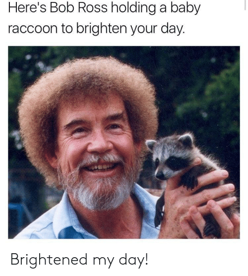 Brightened: Here's Bob Ross holding a baby  raccoon to brighten your day Brightened my day!