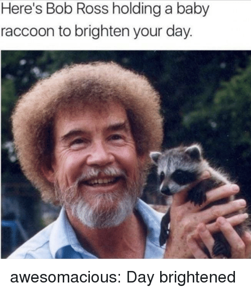 Brightened: Here's Bob Ross holding a baby  raccoon to brighten your day awesomacious:  Day brightened