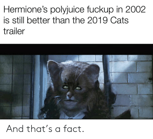 Cats, Still, and Fact: Hermione's polyjuice fuckup in 2002  is still better than the 2019 Cats  trailer And that's a fact.