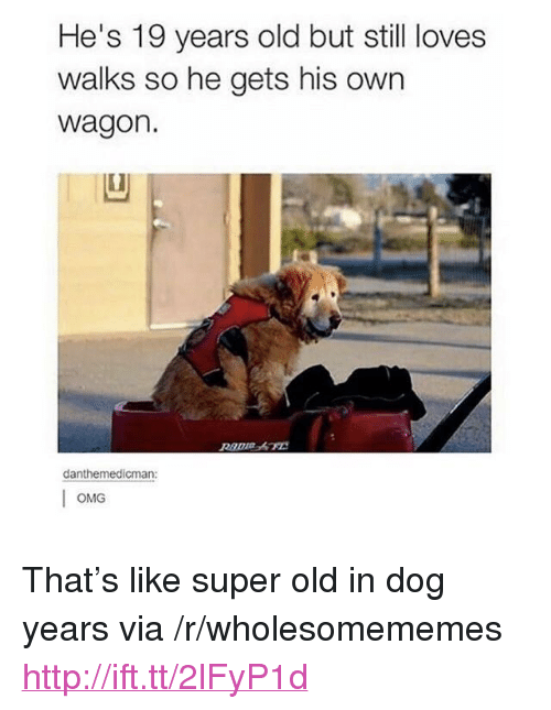 """dog years: He's 19 years old but still loves  walks so he gets his own  wagon.  danthemedicman:  OMG <p>That&rsquo;s like super old in dog years via /r/wholesomememes <a href=""""http://ift.tt/2lFyP1d"""">http://ift.tt/2lFyP1d</a></p>"""