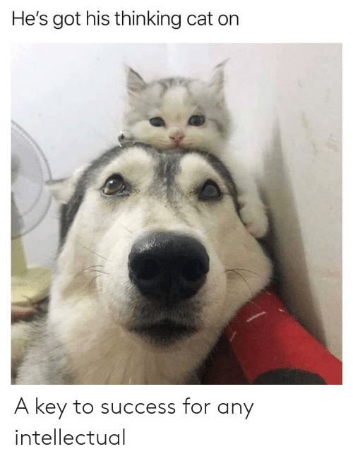 Success, Got, and Cat: He's got his thinking cat on A key to success for any intellectual