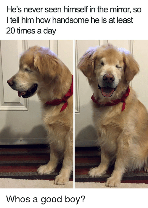Good, Mirror, and Never: He's never seen himself in the mirror, so  l tell him how handsome he is at least  20 times a day Whos a good boy?