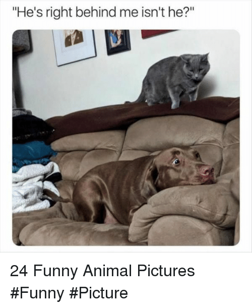 """funny picture: """"He's right behind me isn't he?"""" 24 Funny Animal Pictures #Funny #Picture"""