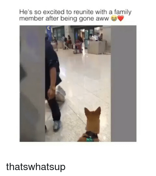 So Excite: He's so excited to reunite with a family  member after being gone aww thatswhatsup