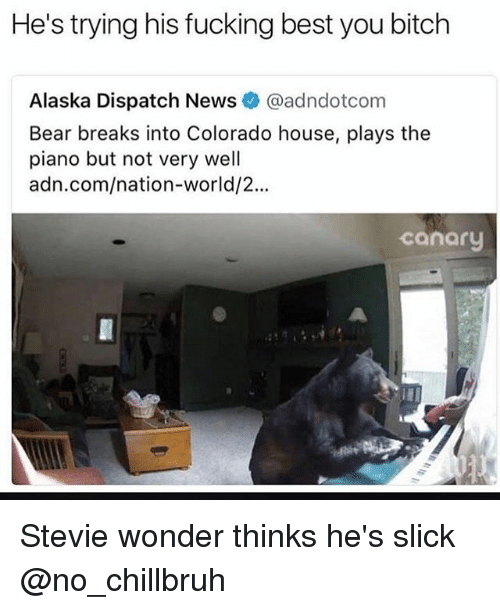 bearings: He's trying his fucking best you bitch  Alaska Dispatch News @adndotcom  Bear breaks into Colorado house, plays the  piano but not very well  adn.com/nation-world/2..  canary Stevie wonder thinks he's slick @no_chillbruh