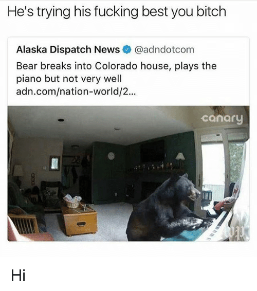 bearings: He's trying his fucking best you bitch  Alaska Dispatch News@adndotcom  Bear breaks into Colorado house, plays the  piano but not very well  adn.com/nation-world/2...  canary Hi