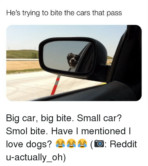 Love Dogs: He's trying to bite the cars that pass Big car, big bite. Small car? Smol bite. Have I mentioned I love dogs? 😂😂😂 (📷: Reddit u-actually_oh)