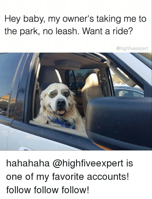 follow-follow-follow: Hey baby, my owner's taking me to  the park, no leash. Want a ride?  @high five expert hahahaha @highfiveexpert is one of my favorite accounts! follow follow follow!