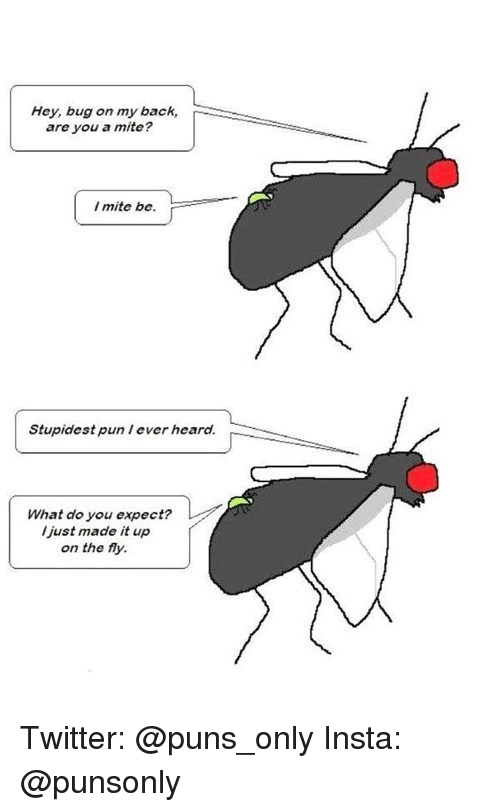 Puns, Twitter, and Back: Hey, bug on my back,  are you a mite?  I mite be.  Stupidest pun I ever heard.  What do you expect?  l just made it up  on the fly. Twitter: @puns_only Insta: @punsonly