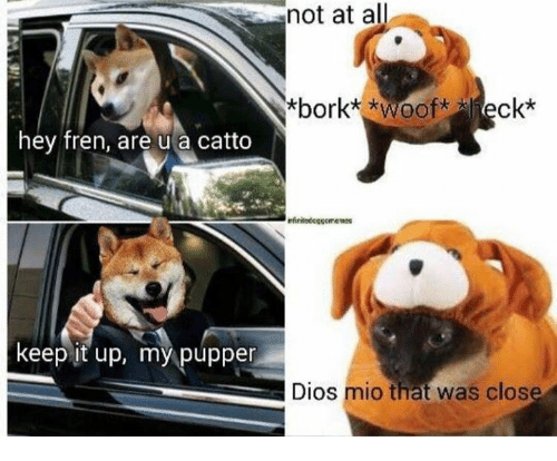 Borking: hey fren, are u a catto  keep it up, my pupper  not at all  *bork* *Wooft ck*  nfinited cocorremess  Dios mio that was close
