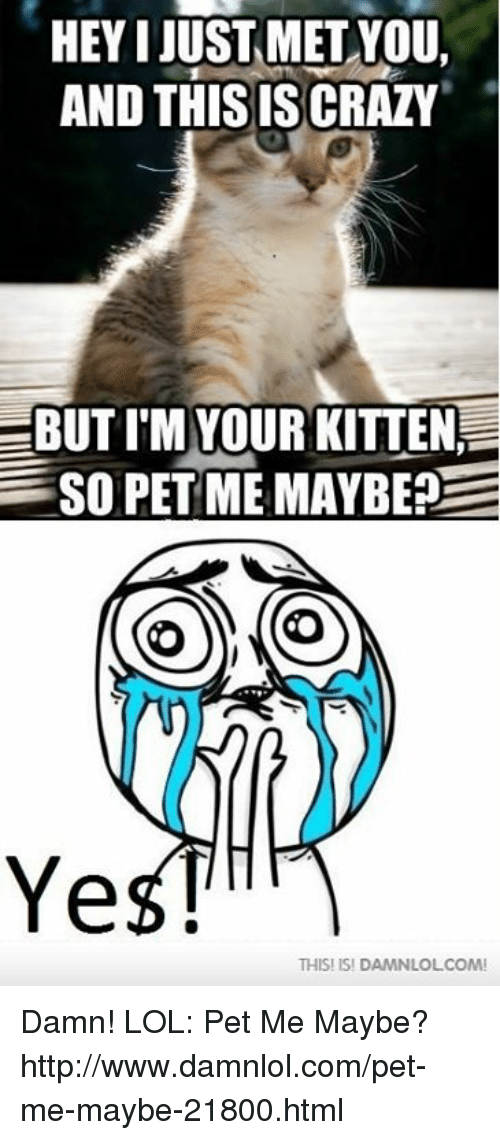 Hey I Just Met You: HEY I JUST MET YOU,  AND THISISSCRAZY  EBUTI M YOUR KITTEN  SO PET ME MAYBE?  E  O  Ye  THIS! ISI DAMNLOLCOMI Damn! LOL: Pet Me Maybe? http://www.damnlol.com/pet-me-maybe-21800.html