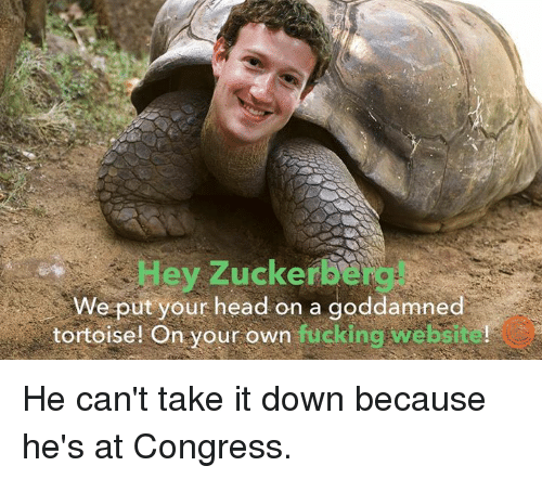 take-it-down: Hey Zuckerbe  We put your head on a goddamned  tortoise! On your own fucking website!  tortoise! On your own fucking He can't take it down because he's at Congress.