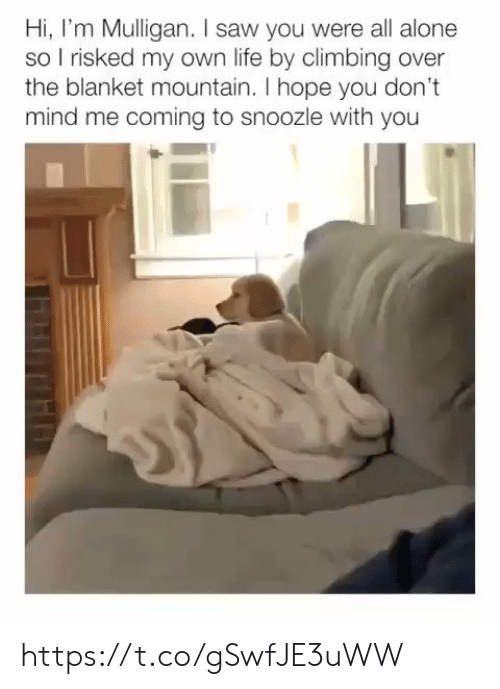 Climbing: Hi, I'm Mulligan. I saw you were all alone  so I risked my own life by climbing over  the blanket mountain. I hope you don't  mind me coming to snoozle with you  Th https://t.co/gSwfJE3uWW
