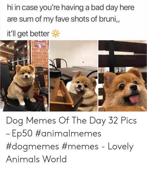 Animals, Bad, and Bad Day: hi in case you're having a bad day here  are sum of my fave shots of bruni,,  it'll get better  STORE HOURS:  9:30AM-10PM Dog Memes Of The Day 32 Pics – Ep50 #animalmemes #dogmemes #memes - Lovely Animals World