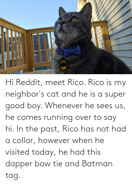 rico: Hi Reddit, meet Rico. Rico is my neighbor's cat and he is a super good boy. Whenever he sees us, he comes running over to say hi. In the past, Rico has not had a collar, however when he visited today, he had this dapper bow tie and Batman tag.