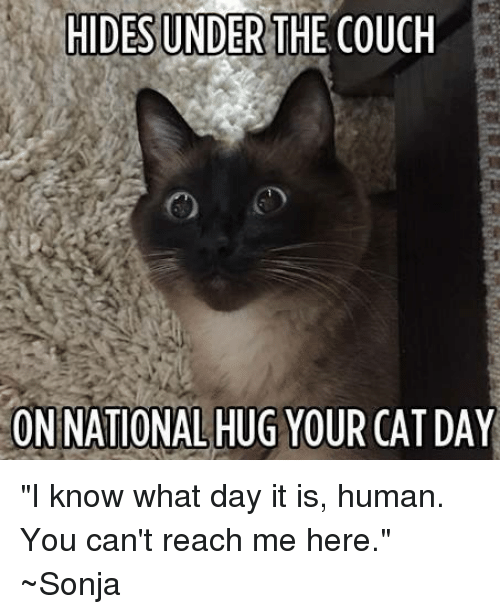 Hides Under The Couch On National Hug Your Cat Day I Know What Day