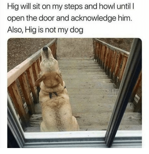 Dog, Him, and Open: Hig will sit on my steps and howl until I  open the door and acknowledge him.  Also, Hig is not my dog
