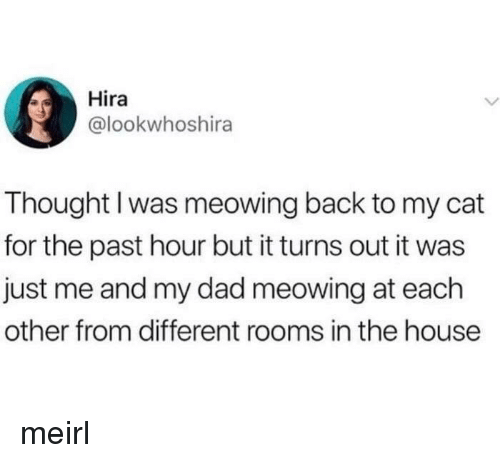 Me And My Dad: Hira  @lookwhoshira  Thought I was meowing back to my cat  for the past hour but it turns out it was  just me and my dad meowing at each  other from different rooms in the house meirl