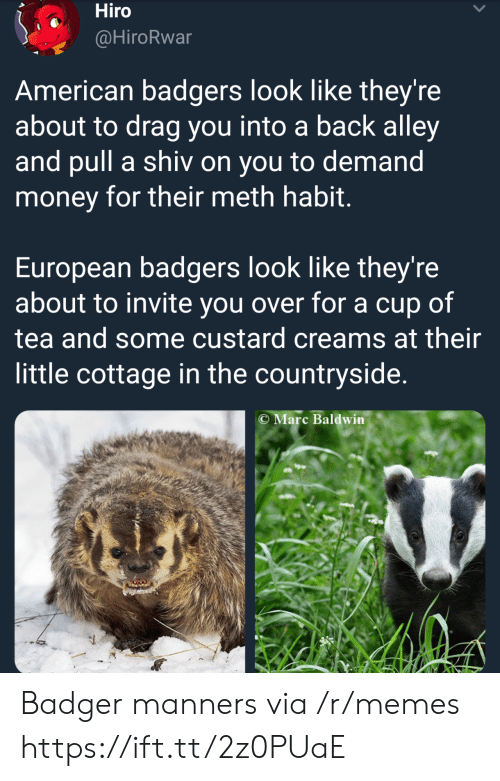 badger: Hiro  @HiroRwar  American badgers look like they're  about to drag you into a back alley  and pull a shiv on you to demand  money for their meth habit  European badgers look like they're  about to invite you over for a cup of  tea and some custard creams at their  little cottage in the countryside.  C Marc Baldwin Badger manners via /r/memes https://ift.tt/2z0PUaE