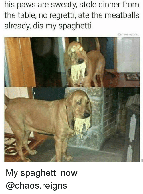 meatballs: his paws are sweaty, stole dinner from  the table, no regretti, ate the meatballs  already, dis my spaghetti  @chaos.reigns My spaghetti now @chaos.reigns_