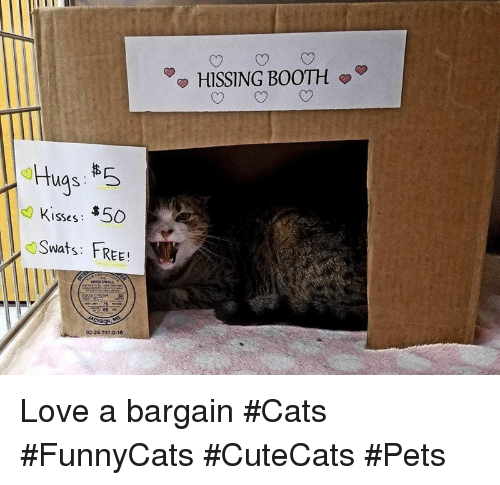 Cats, Love, and Pets: HISSING BOOTH  Kisses: $50  Swats: FREE!  02-24-797-0-10 Love a bargain #Cats #FunnyCats #CuteCats #Pets