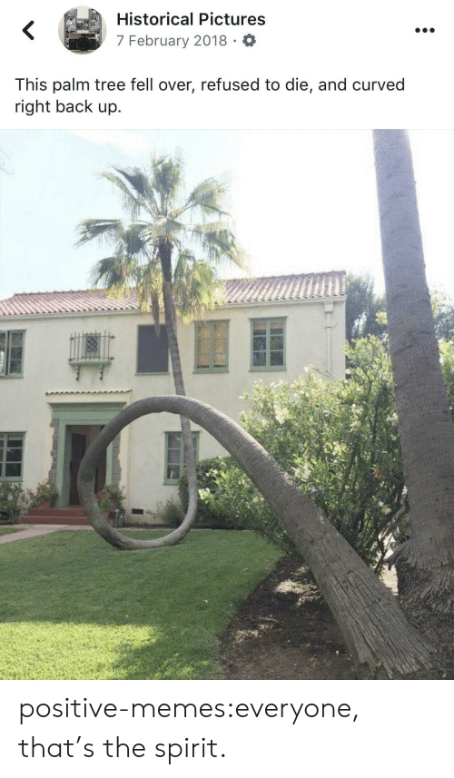 Memes, Tumblr, and Blog: Historical Pictures  7 February 2018 O  This palm tree fell over, refused to die, and curved  right back up.  C) positive-memes:everyone, that's the spirit.