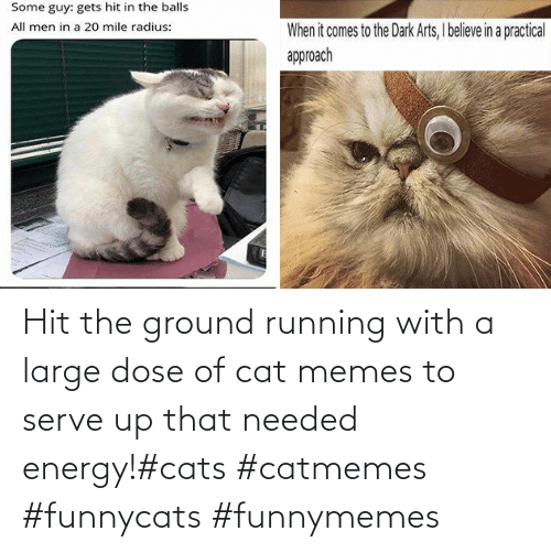 Memes To: Hit the ground running with a large dose of cat memes to serve up that needed energy!#cats #catmemes #funnycats #funnymemes