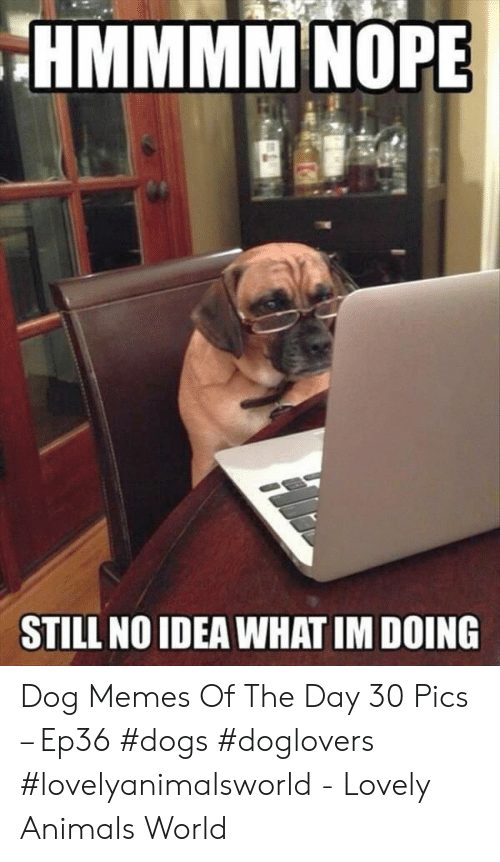Animals, Dogs, and Memes: HMMMM NOPE  STILL NO IDEA WHAT IM DOING Dog Memes Of The Day 30 Pics – Ep36 #dogs #doglovers #lovelyanimalsworld - Lovely Animals World