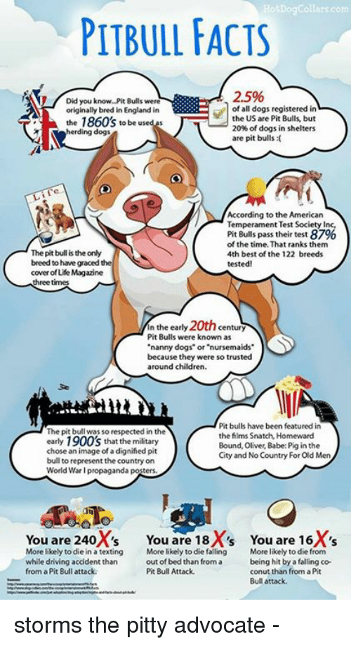 Ho Dog Collar Com PITBULL FACTS 25% Did You Know Pit Bulls Were of