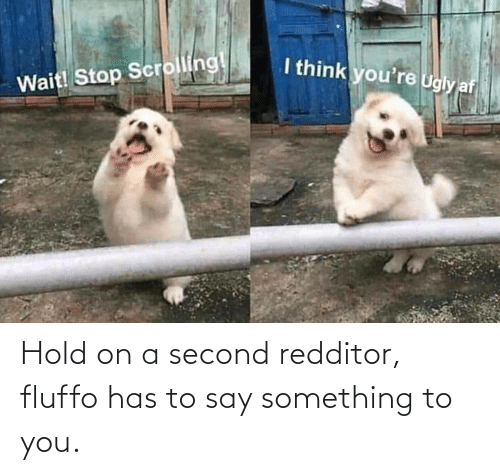 Redditor: Hold on a second redditor, fluffo has to say something to you.