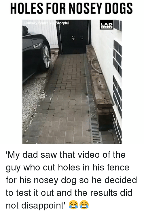 Dad, Dogs, and Memes: HOLES FOR NOSEY DOGS  oryful  LAD  BIBLE 'My dad saw that video of the guy who cut holes in his fence for his nosey dog so he decided to test it out and the results did not disappoint' 😂😂