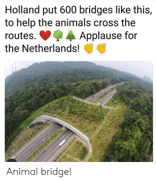 Animals, Animal, and Cross: Holland put 600 bridges like this,  to help the animals cross the  Applause for  routes.  the Netherlands! Animal bridge!