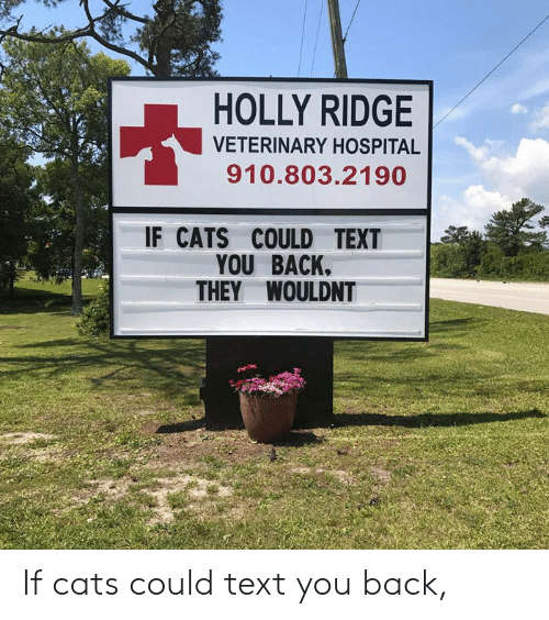 Veterinary: HOLLY RIDGE  VETERINARY HOSPITAL  910.803.2190  IF CATS COULD TEXT  YOU BACK.  THEY WOULDNT If cats could text you back,